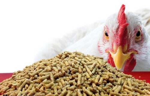 ارتباط رژیم با جوجه و مرغ