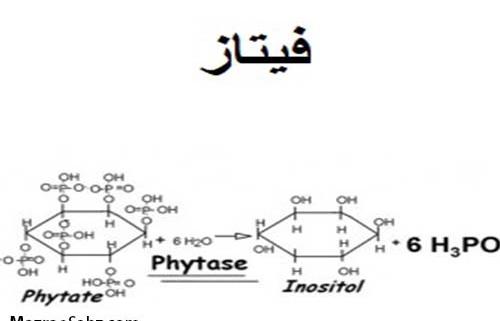 فیتاز ، خنثی کننده تاثیرات کاهش اسید آمنه