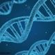 انتخاب ژنتیک متوازن ، آینده پرورش طیور