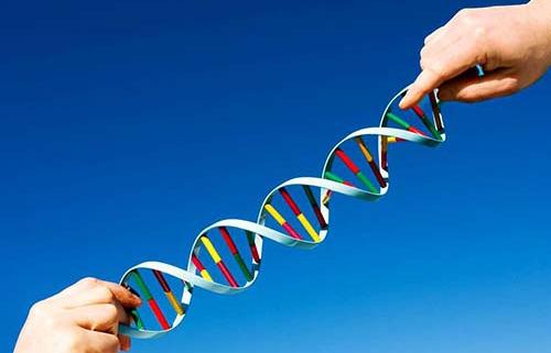 انتقال ژن چند قلویی به دام
