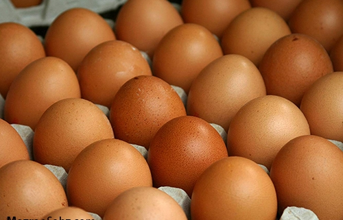 اجزاء تخم مرغ