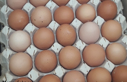 احتمال وضع عوارض صادرات تخم مرغ