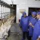 تاثیر ذبح شوک در گوشت مرغ
