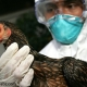 ایمن سازی علیه آنفلونزا فوق حاد