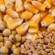 افزایش جهانی خوراک دام