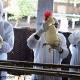 آخرین اخبار آنفلونزا حاد در کشور