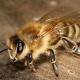 یادآوری چهره در زنبور