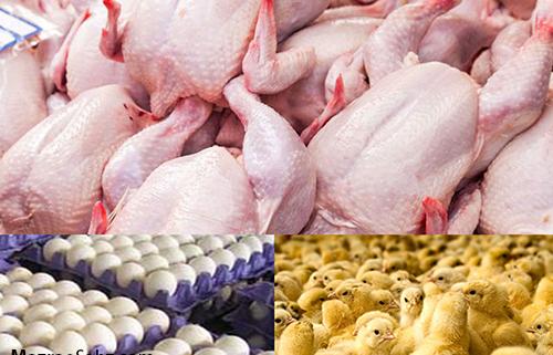 واردات برای تنظیم بازار