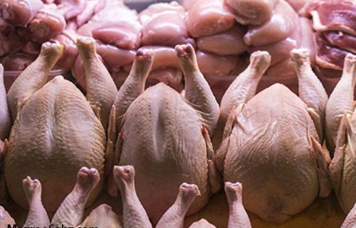 مجوز واردات 120 تن گوشت مرغ