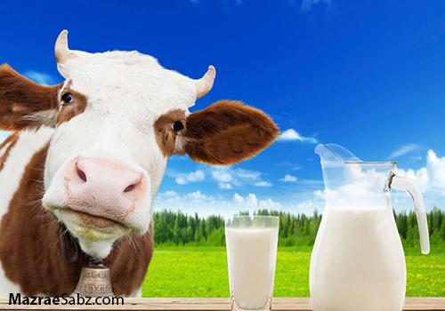 افزایش شیر خام